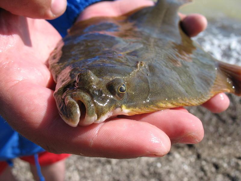 Как я провел рыбалку на Тилигульском лимане
