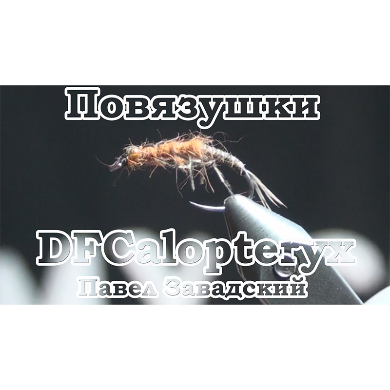 Повязушки. DFCalopteryx