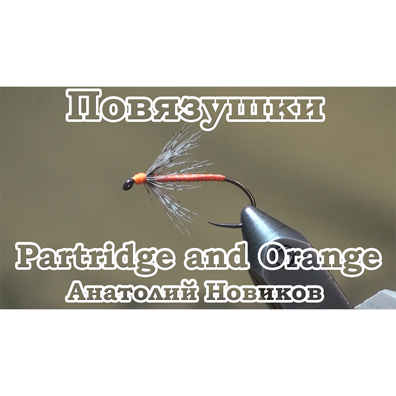 Повязушки. Partridge and Orange