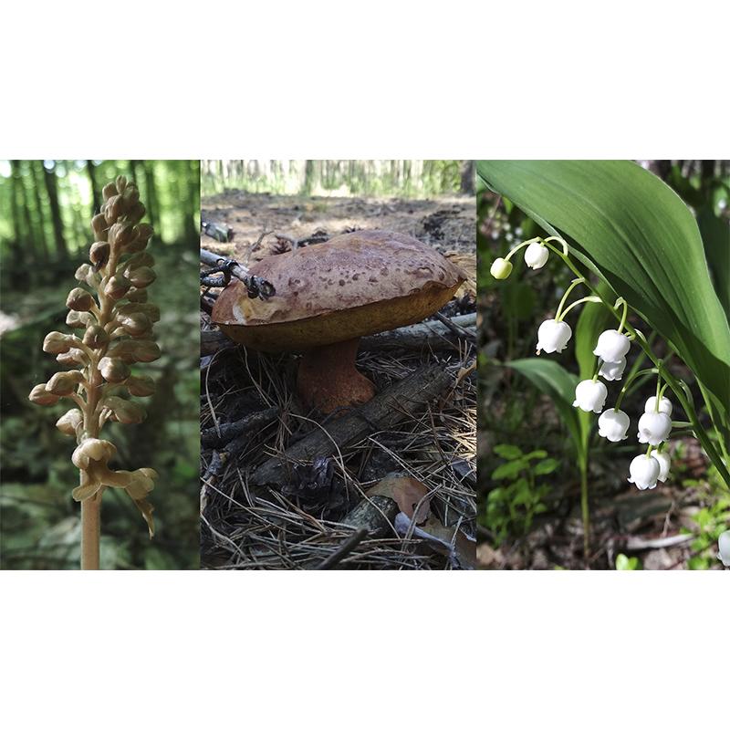 Прогулянка лісом. Орхідея. Білий. Конвалія. Спаржа.